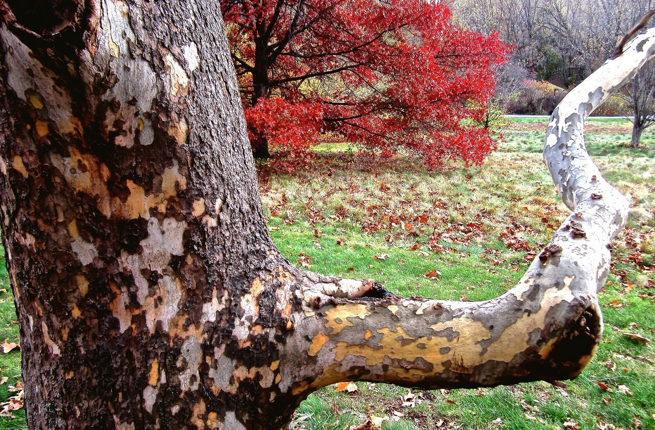 Fall Leaves New England  Trees Tree Lover Tree Bark Nature Textures Hugging A Tree