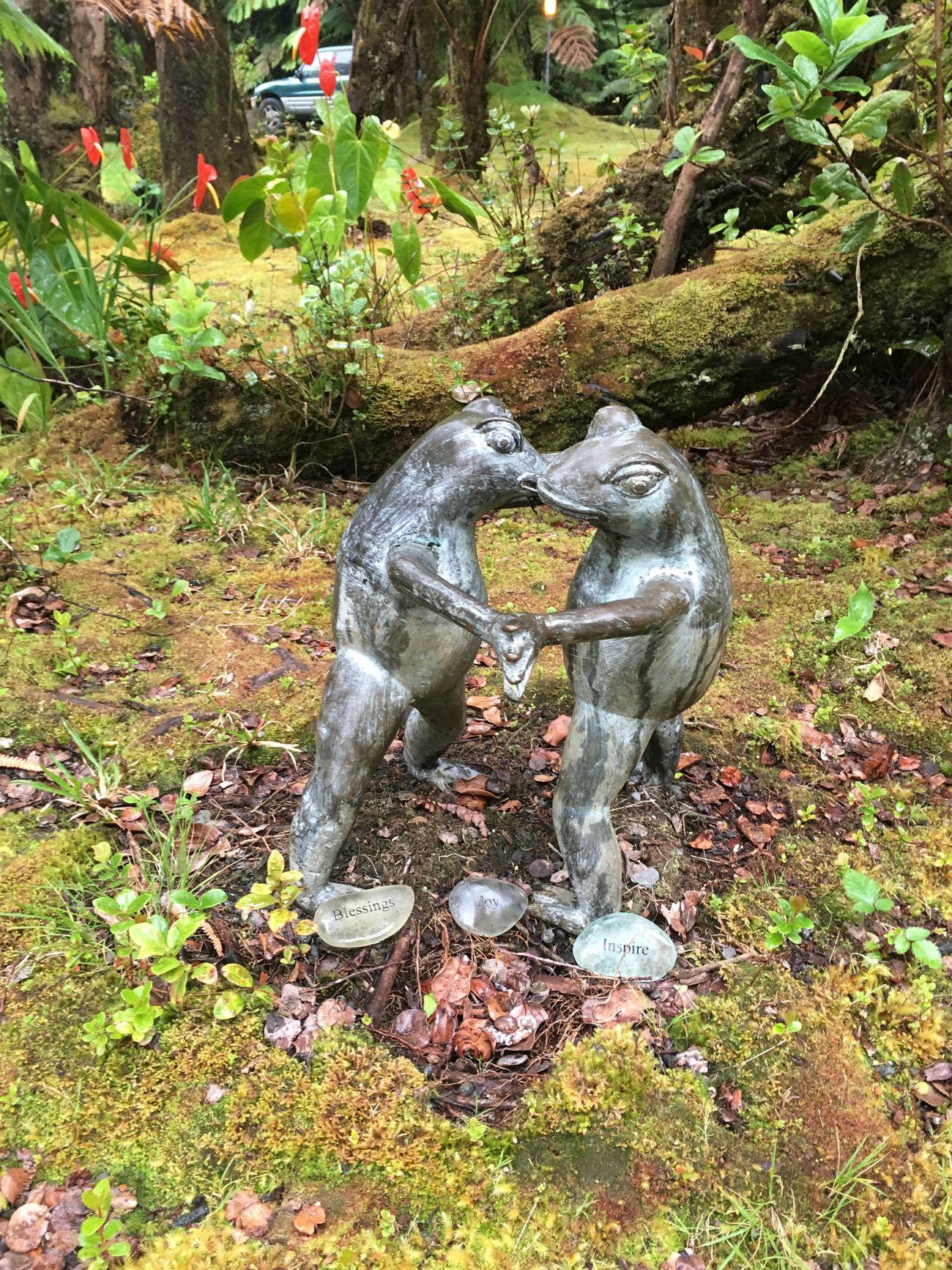 Froggy Style Froggy Dance Big Island Hawaii Kilauea Lodge Big Island