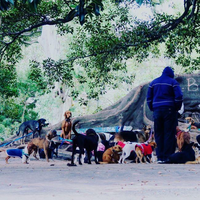 Dog Walker is Taking A Break with Dogs