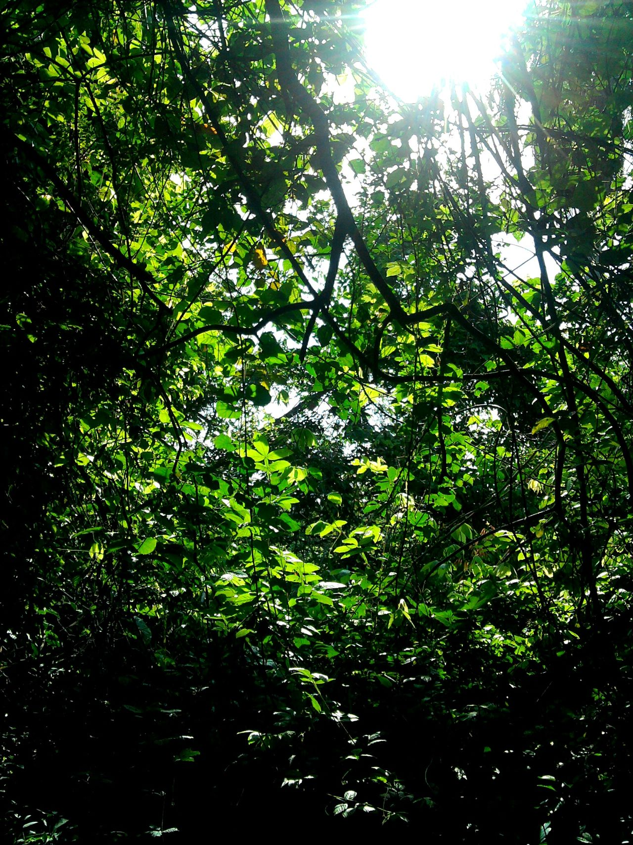 Visual Feast Green Color Tree Nature No People Beauty In Nature Sunlight Samsungphotography EyeEmNewHere ✨