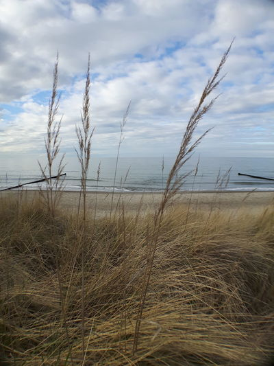 Beach Beauty In Nature Close-up Cloud - Sky Day Grass Growth Horizon Over Water Landscape Marram Grass Nature No People Outdoors Sand Scenics Sea Sky Tranquil Scene Tranquility Water