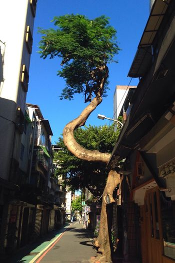 Morning Sunlight Architecture Tree Building Exterior Built Structure Clear Sky Narrow The Way Forward Sky Outdoors Green Color Tree Speciaj Near Hostel