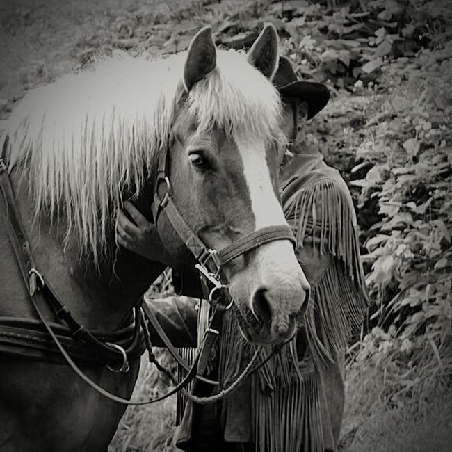 Horse Western Taking Photos Relaxing Ignature Nature_perfection Naturelovers EyeEm Best Shots Igbest Nikon Nikonphotography Ignikon Nikonigers Igers Nature Photography Iggermany Black&white Blackandwhite Photography Black & White Blackandwhite Bwigers