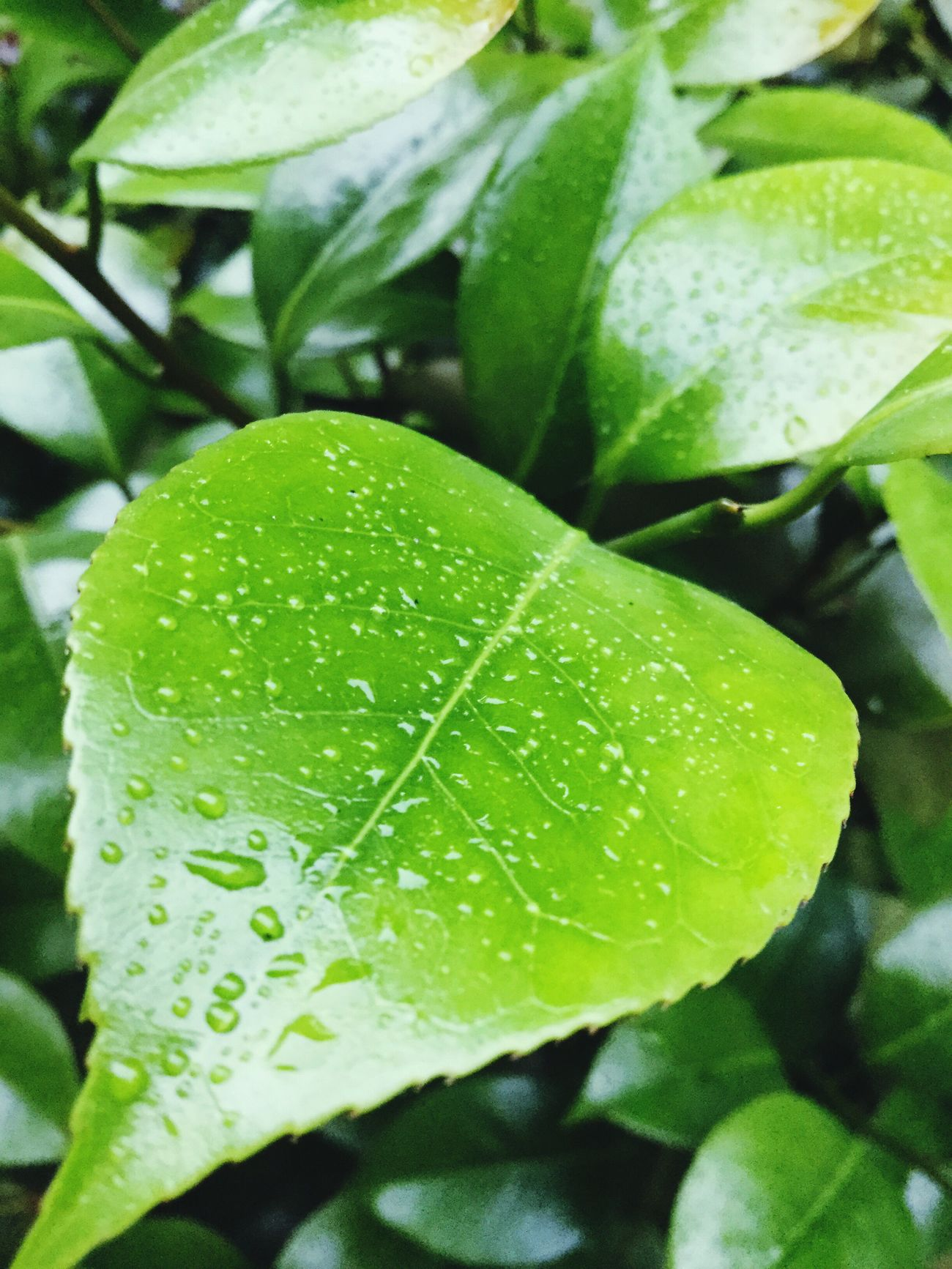 Leaf 🍂 Leaf Me Alone Rainy Days☔