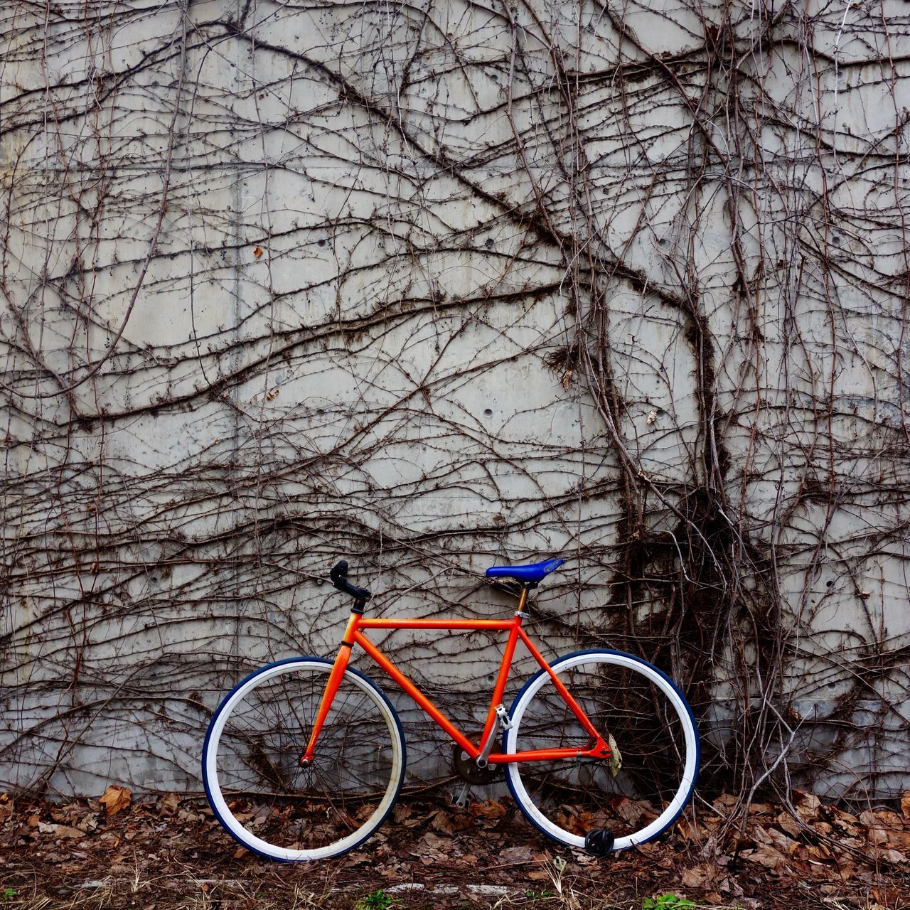 Beautiful stock photos of shanghai, Bicycle, Blue, Creeper Plant, Day