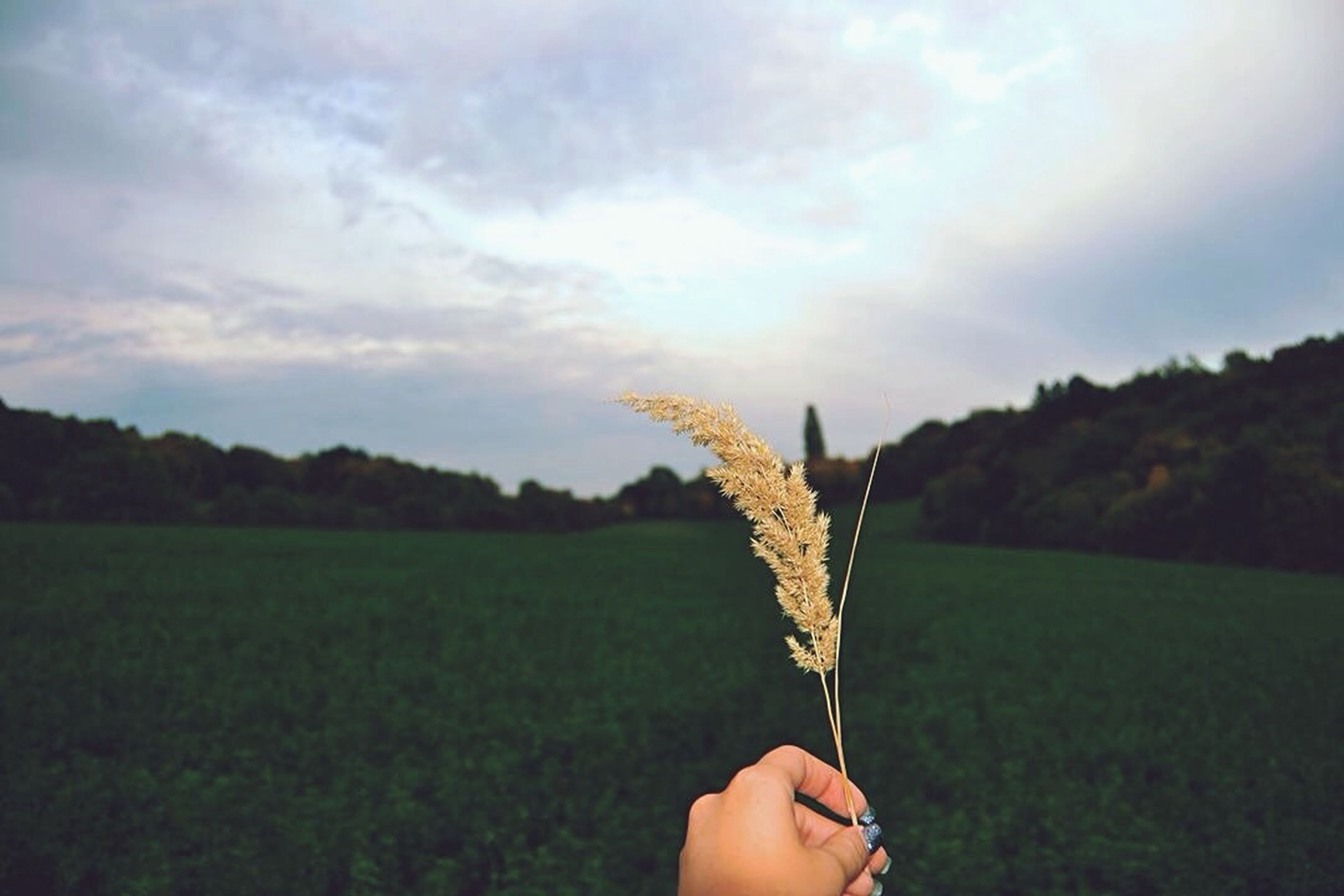 person, grass, holding, field, one animal, part of, sky, tree, animal themes, cropped, human finger, unrecognizable person, nature, grassy, lifestyles, landscape, green color