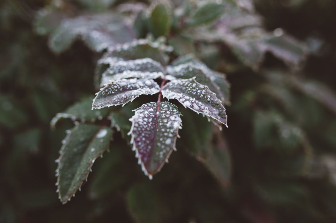 Beauty In Nature Close-up Cold Temperature Drop Fragility Ice Leaves Leaves Nature No People Outdoors Plant Winter Winter Trees