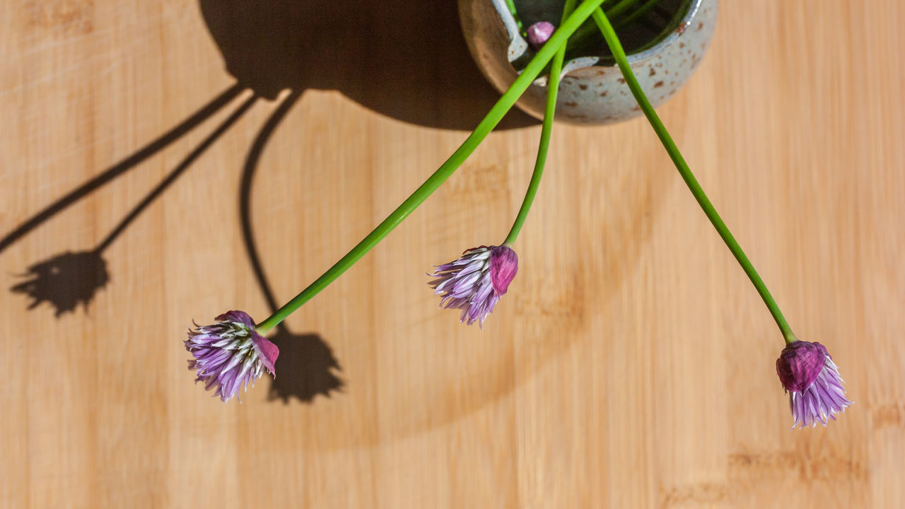 Blooming Blossoms  Chive Flower Chives Cooking Day Flower Flower Head Fragility Freshness Herbs High Angle View Indoors  Kitchen Nature No People Plant Purple Still Life Table Tabletop Wood - Material