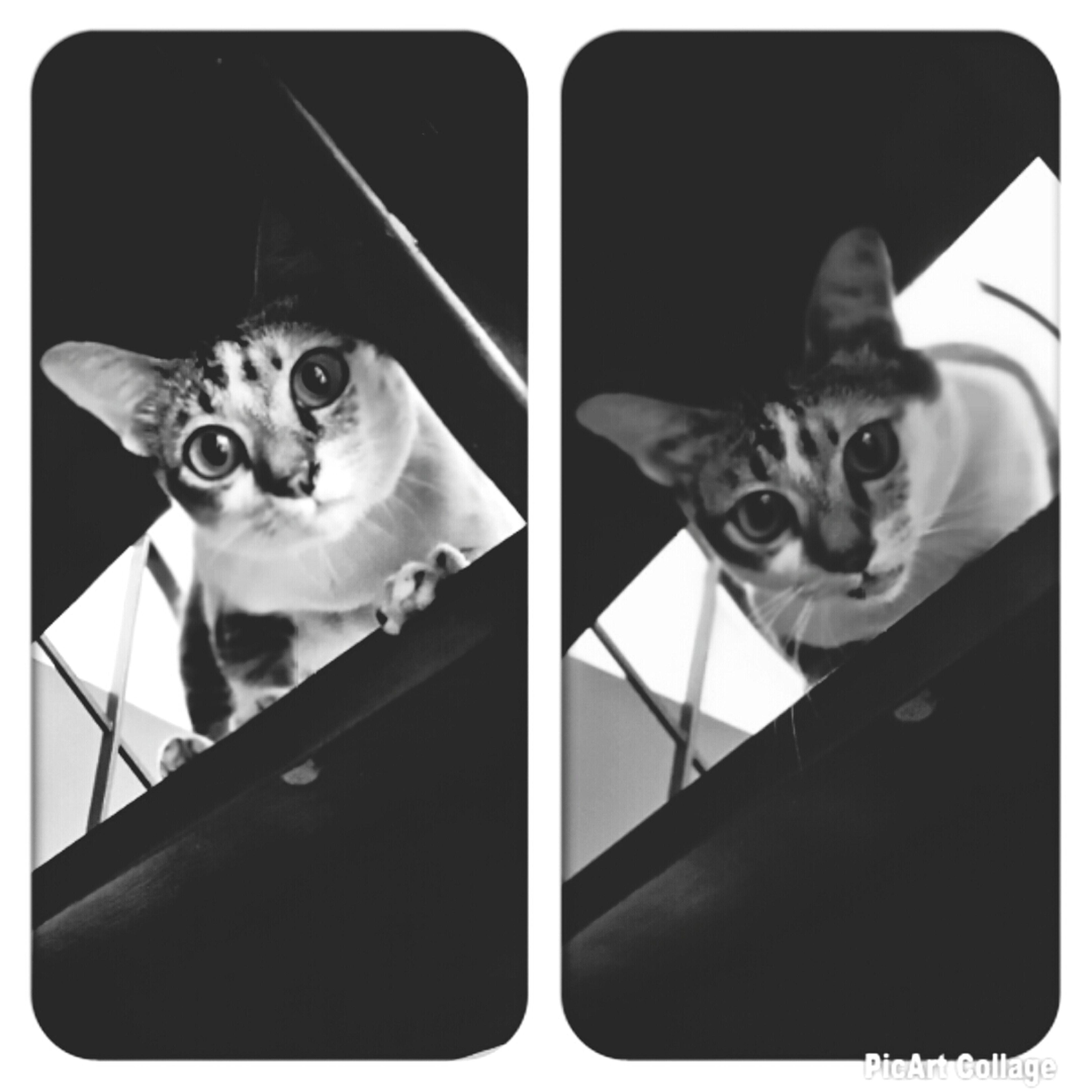Cat Cat Lovers ??