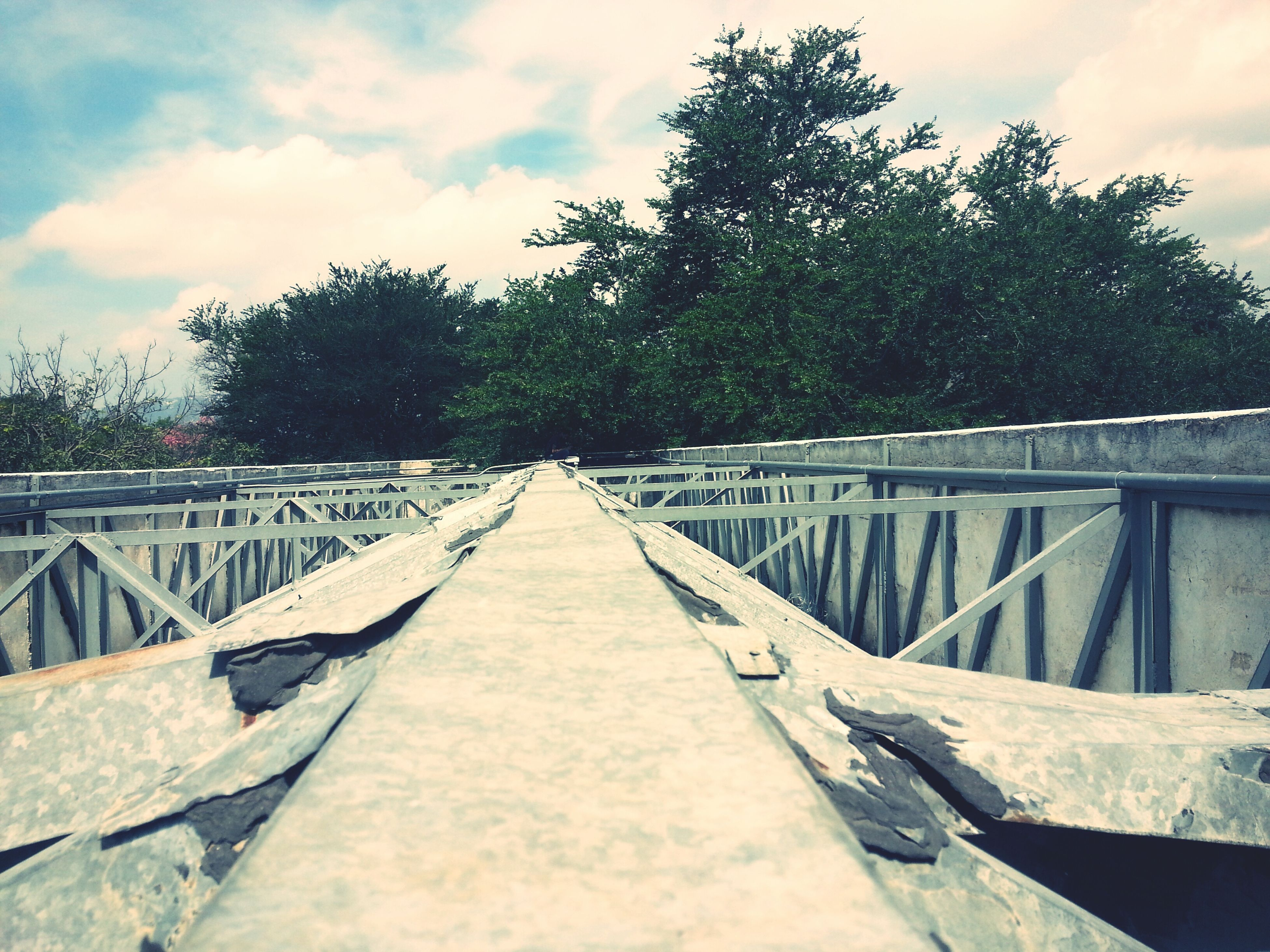 the way forward, tree, sky, bridge - man made structure, diminishing perspective, footbridge, connection, water, wood - material, cloud - sky, vanishing point, tranquility, nature, long, day, boardwalk, outdoors, cloud, no people, tranquil scene, growth, cloudy, beauty in nature, walkway, scenics, narrow