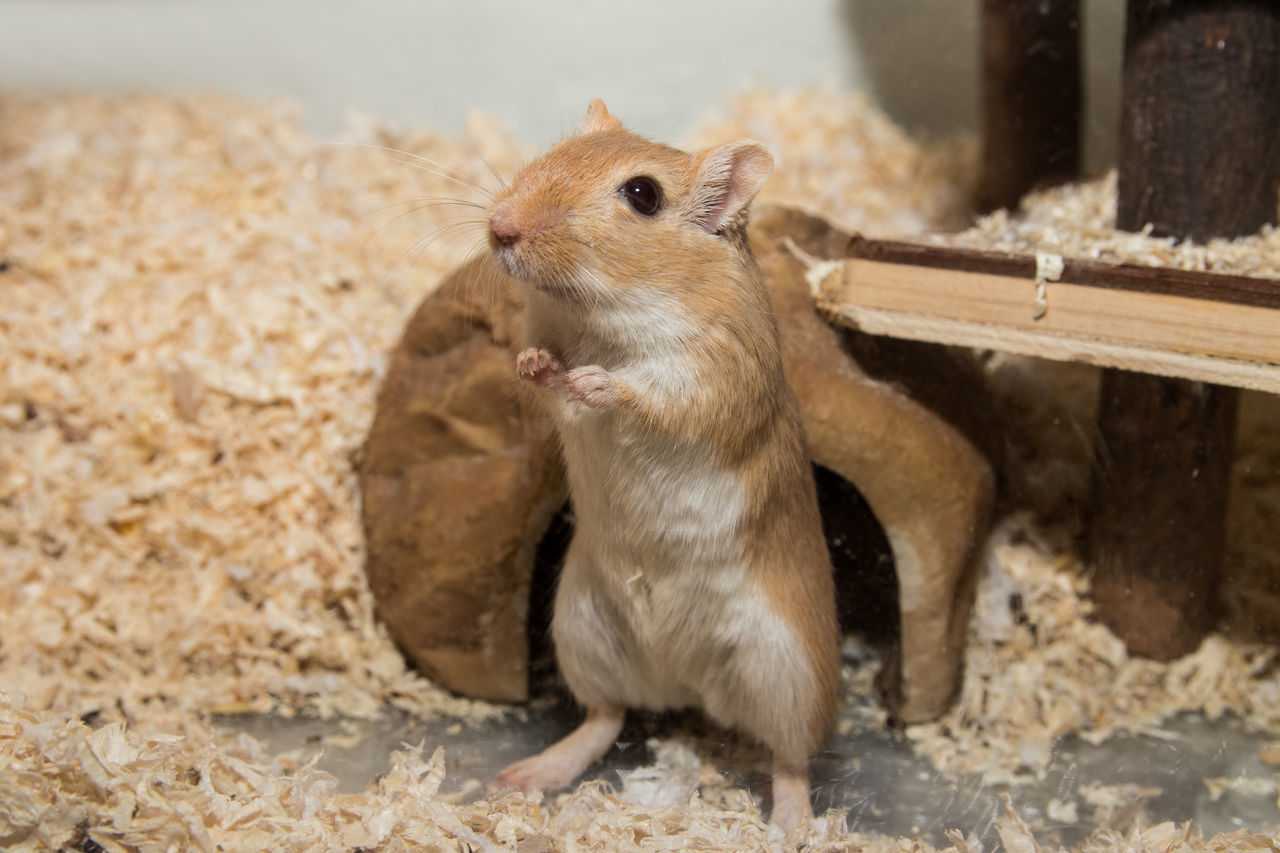 rodent, one animal, animal themes, squirrel, eating, animals in the wild, food and drink, mammal, no people, animal wildlife, food, day, sitting, close-up, nature, outdoors