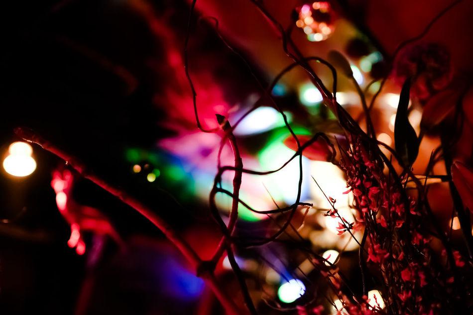 Beautiful stock photos of party, Bar, Berlin, Close-Up, Decoration