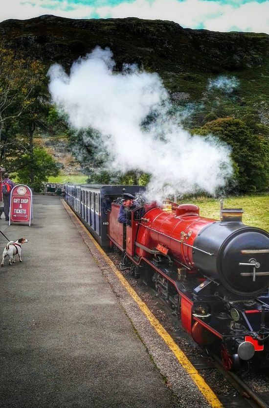 Sightseeing Ratty Railway Station Capture The Moment Steam Locomotive Who's Looking At You?