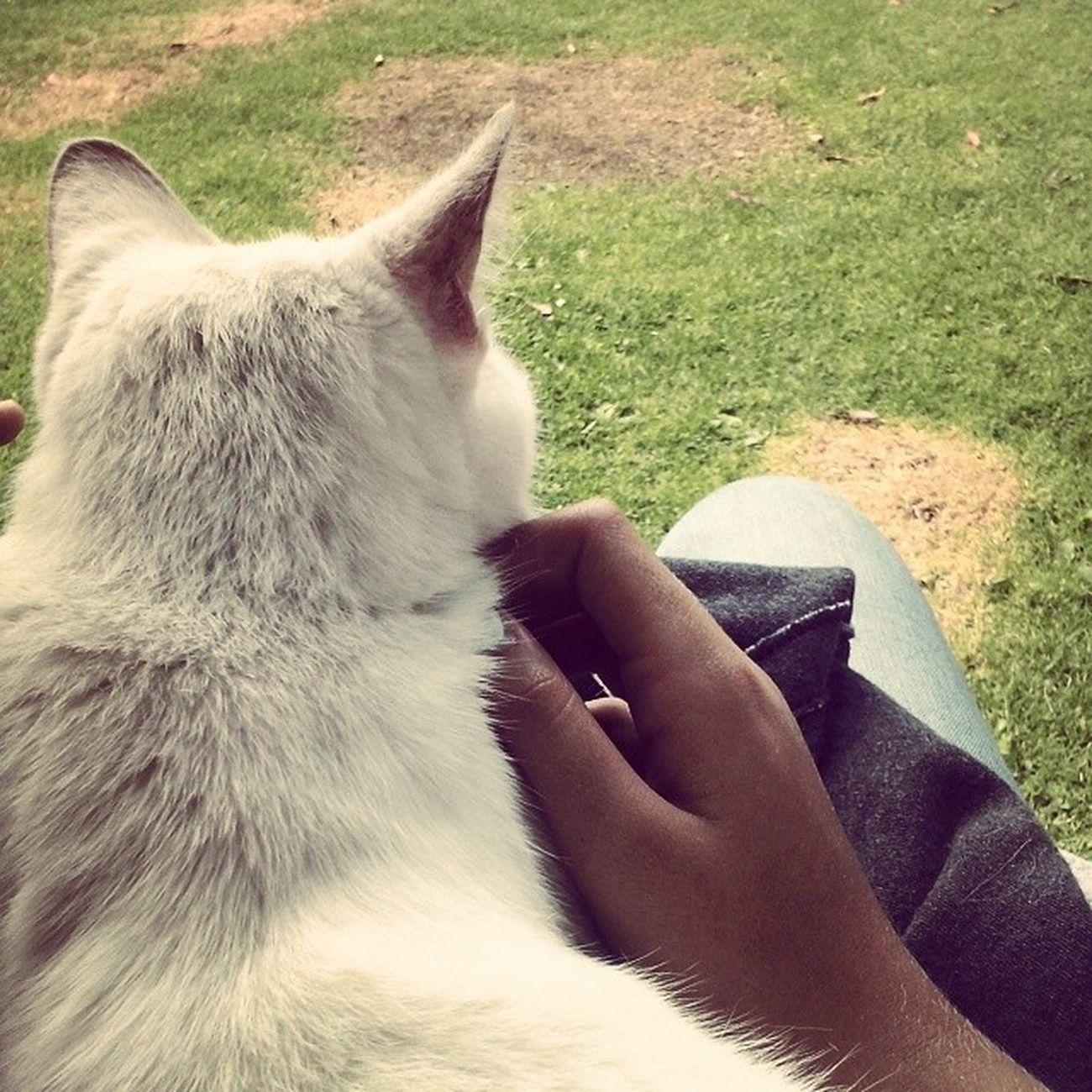 Frinton Cat Tumbona Vagasdemierda