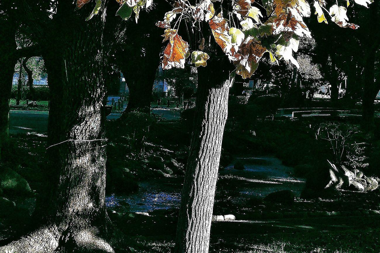 Autumn Autumn Coloura Park Tokyo Japan Travelp