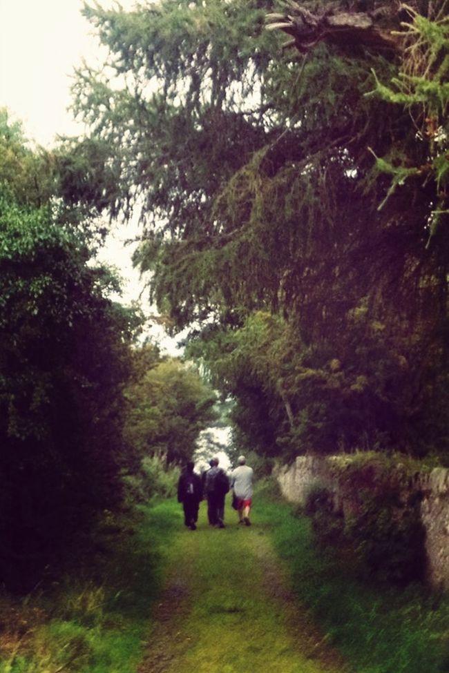 Stroll Down Bog Lane EyeEm Filter Food P Basket Wicklow Ominous