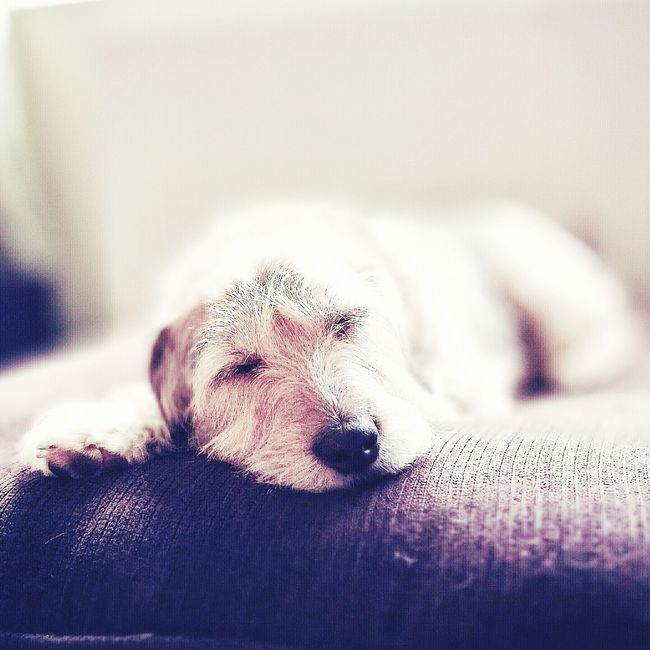 Dogslife Chilling Lazysunday