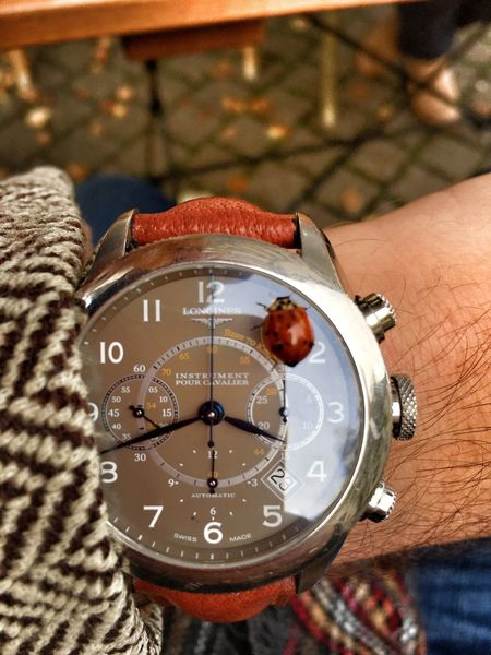 Time Close-up Focus On Foreground Clock One Person Instrument Of Time Vertical Human Body Part Day Person Outdoors Minute Hand People Beetle Animal Autumn Fall Watch Longines