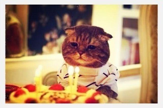 Birthdaycat