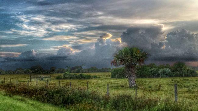 Evening Sky Clouds And Sky Pasture Land Pasture Fence St Sebastian River Preserve State Park