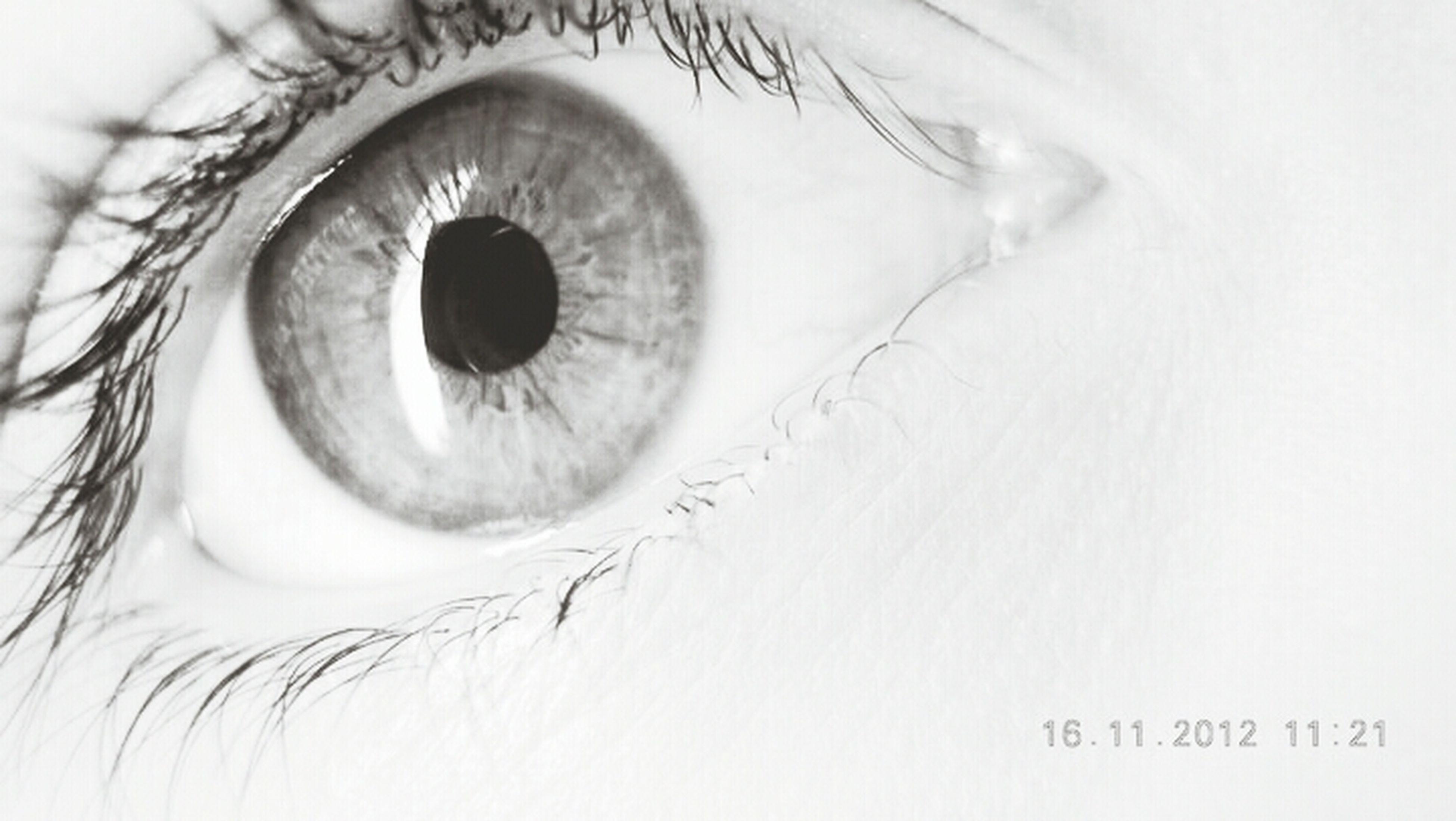 human eye, close-up, indoors, eyesight, extreme close-up, eyelash, sensory perception, part of, white background, human skin, detail, studio shot, eyeball, circle, human face, looking at camera, full frame