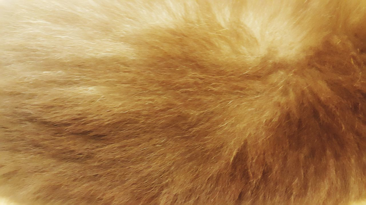 Backgrounds Full Frame Textured  Pattern Shiny Close-up Brown Gold Colored Abstract Gold Yellow No People Nature Day Fur Wool