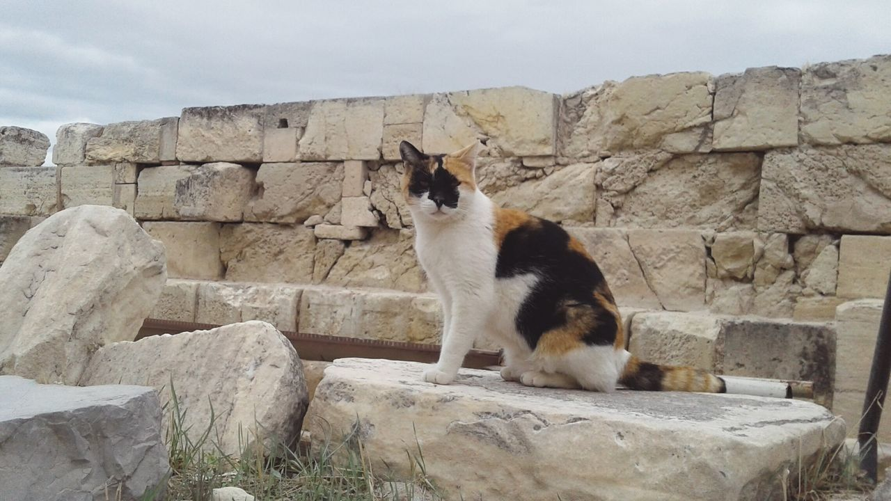 Tabby at the Parthenon Outdoors Sky Animal Themes Day No People Mammal Cloud - Sky Cat Cat Lovers Catsagram Cat Photography Catlovers Cats Of EyeEm Athens, Greece Athens Greece Parthenon Parthenon Acropolis Greece Acropolis, Athens Acropolis Feline Feline Portraits First Eyeem Photo
