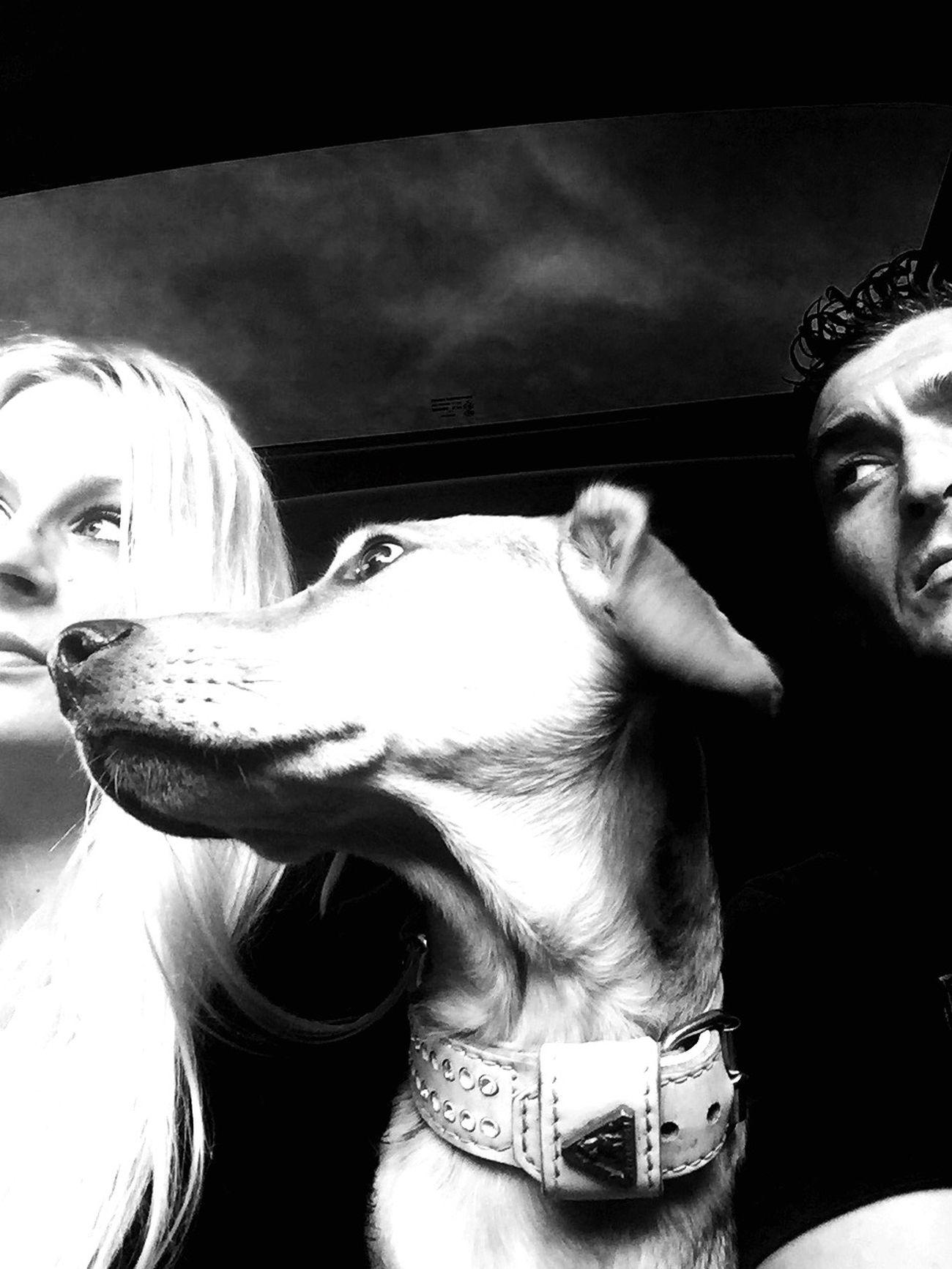 Learn & Shoot: Layering Shades Of Grey EyeEm Best Shots Self Portrait Around The World On The Road I Love My Dog Eyem Best Shots - Black + White Black And White Untold Stories IPhoneography Hollandsnextdogmodel