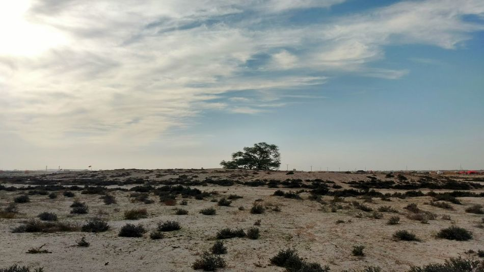 Bahrain Bahrain Tourism The Tree Of Life Sky Nature Outdoors Tree Cloud - Sky Beauty In Nature Lone Tree Tree In The Desert Natural Wonders Of The World Travel Nature