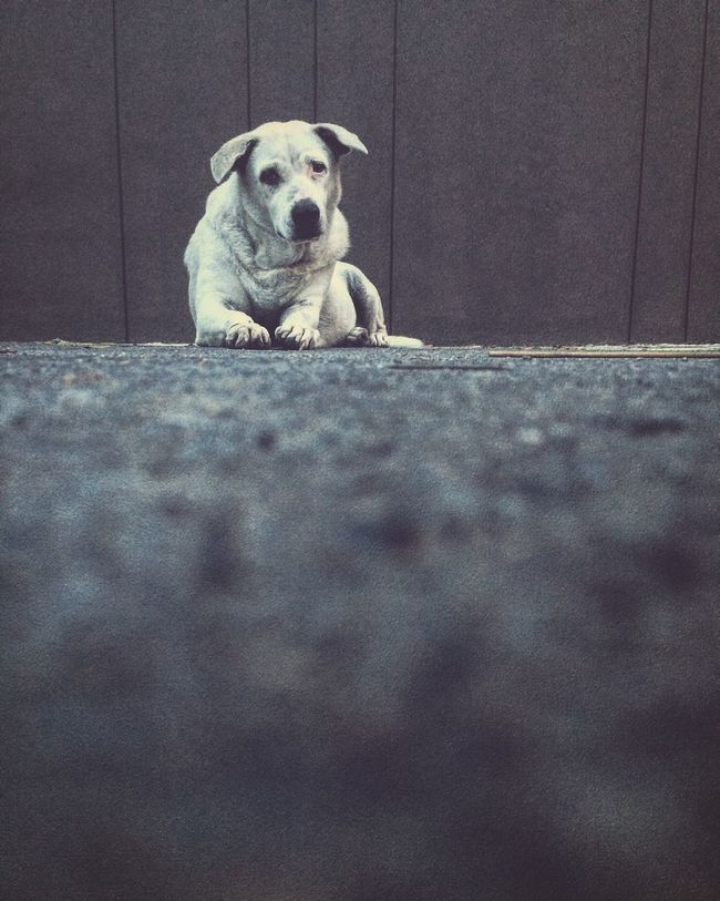 Lonely dog Dog Animal Themes One Animal Pets Domestic Animals Selective Focus Portrait Front View Looking At Camera Wall - Building Feature Close-up Surface Level Peeking Relaxation Animal Head  Looking No People
