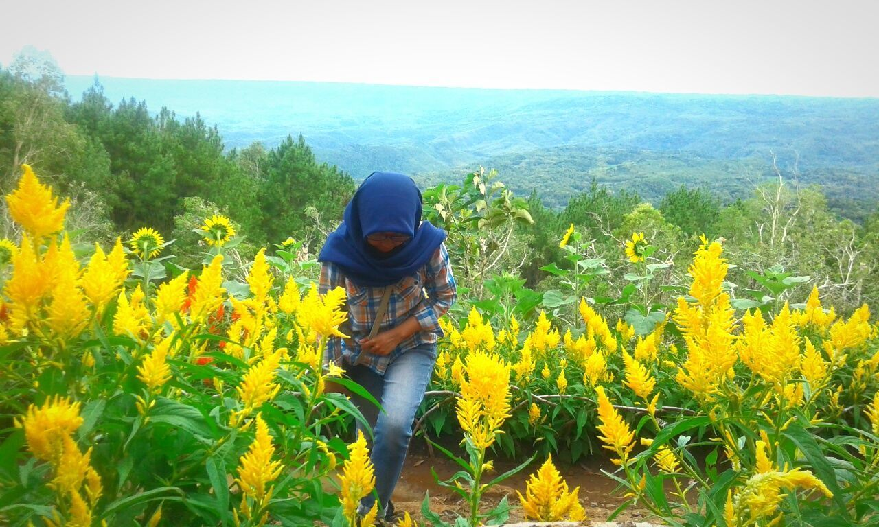 Agriculture Yellow Nature Growth Day Outdoors Plant Landscape Tree People Beauty In Nature Sky Nature Silent Landscape EyeEm Gallery Front View Fine Art Photography City Cold Temperature Nature Photography Freshness Shining Bright Yogyakarta