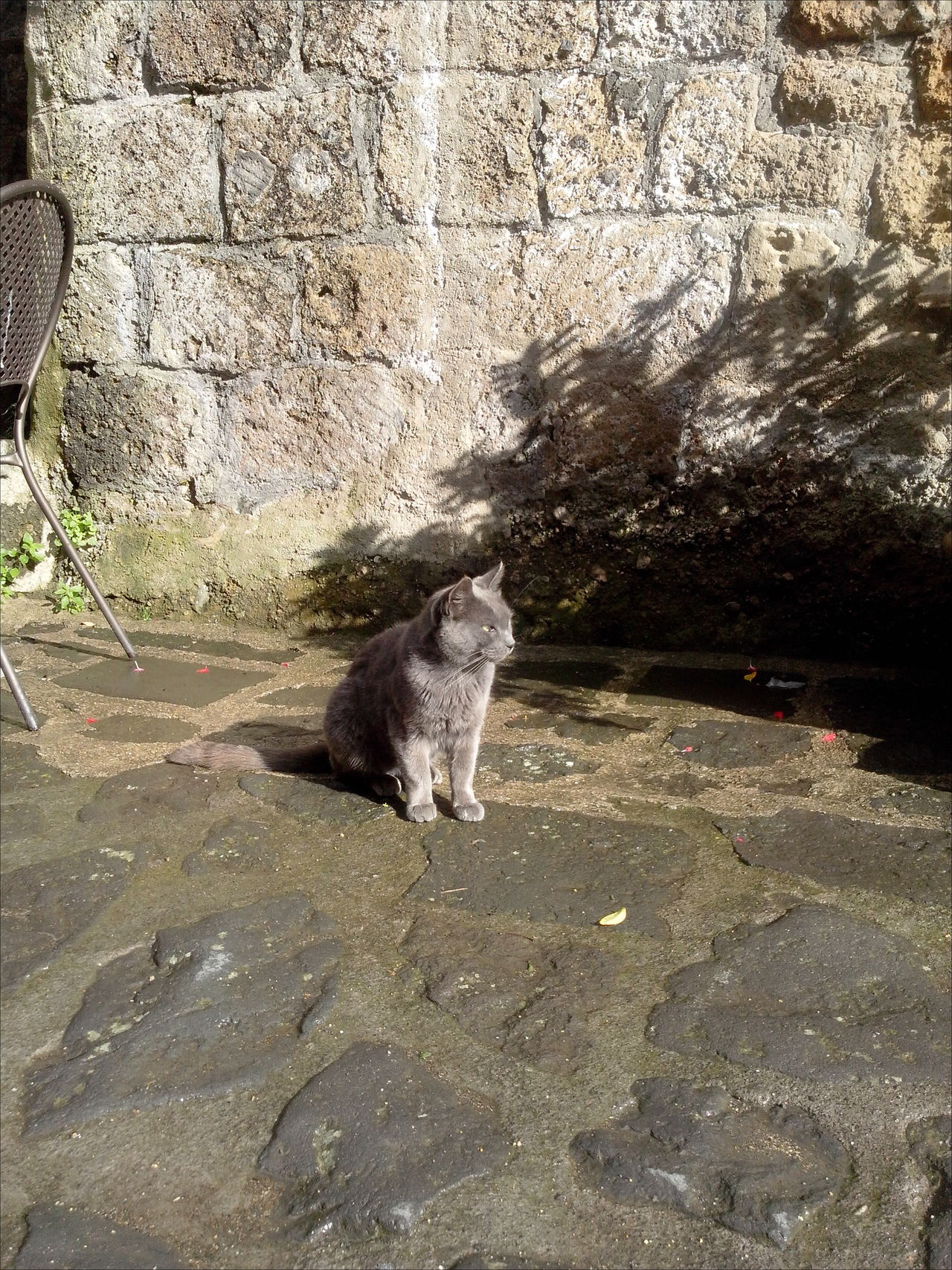 Check This Out Civita Di Bagnoregio Fur Furry Friends Grey Cat Looking For The Sunset Nature Pets Resting Time The City That Is Dying Tuff Tufo