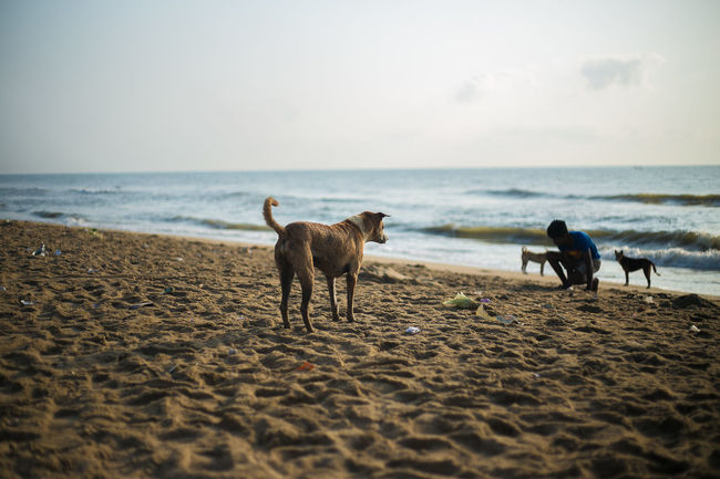 Dog life Horizon Over Water Sea Beach Water Sand Domestic Animals Dog Tranquil Scene Wave One Animal Seascape Full Length Tranquility Shore Pets Mammal Vacations Sky Tourism Nature Tamilnadu Chennai Tadaa Community India Life Is A Beach