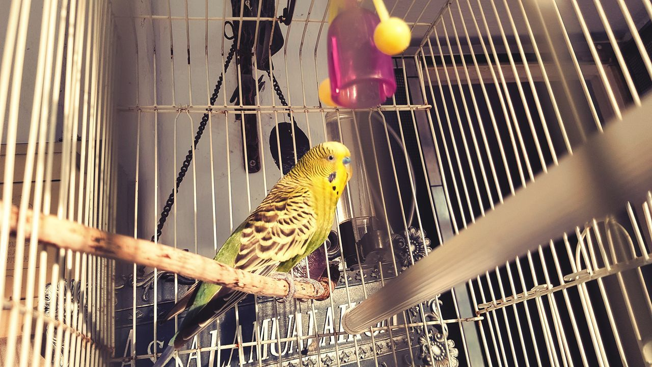 Pet birdy Cage Birdcage One Animal Animal Themes Pets Yellow Indoors  Bird Day Live For The Story Place Of Heart