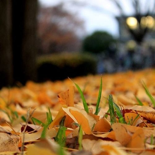 Last bit of autumn!!! Yellow Leaves Tokai Universitydetokai natureautumnleaves autumnmotherearthground東海大学 stonedspacing