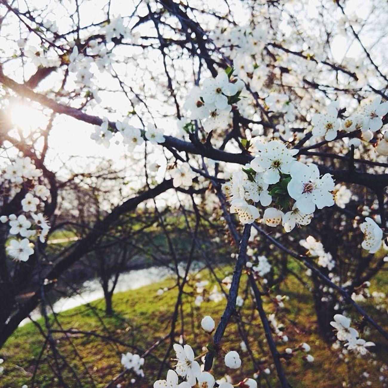 Vscoonly Cityminsk Spring