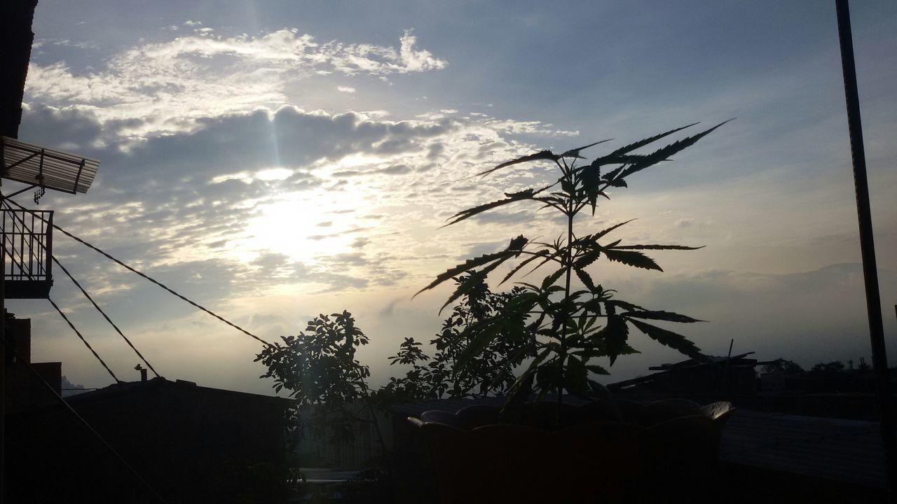 A new day!! Culturicemos El Cannabis!!!