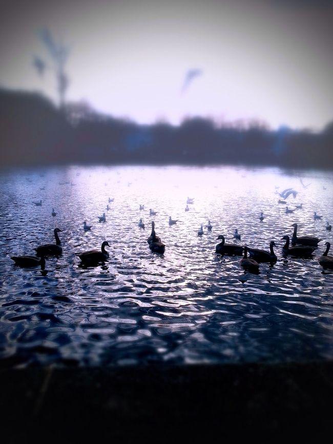Nature Birds Landscape Fog