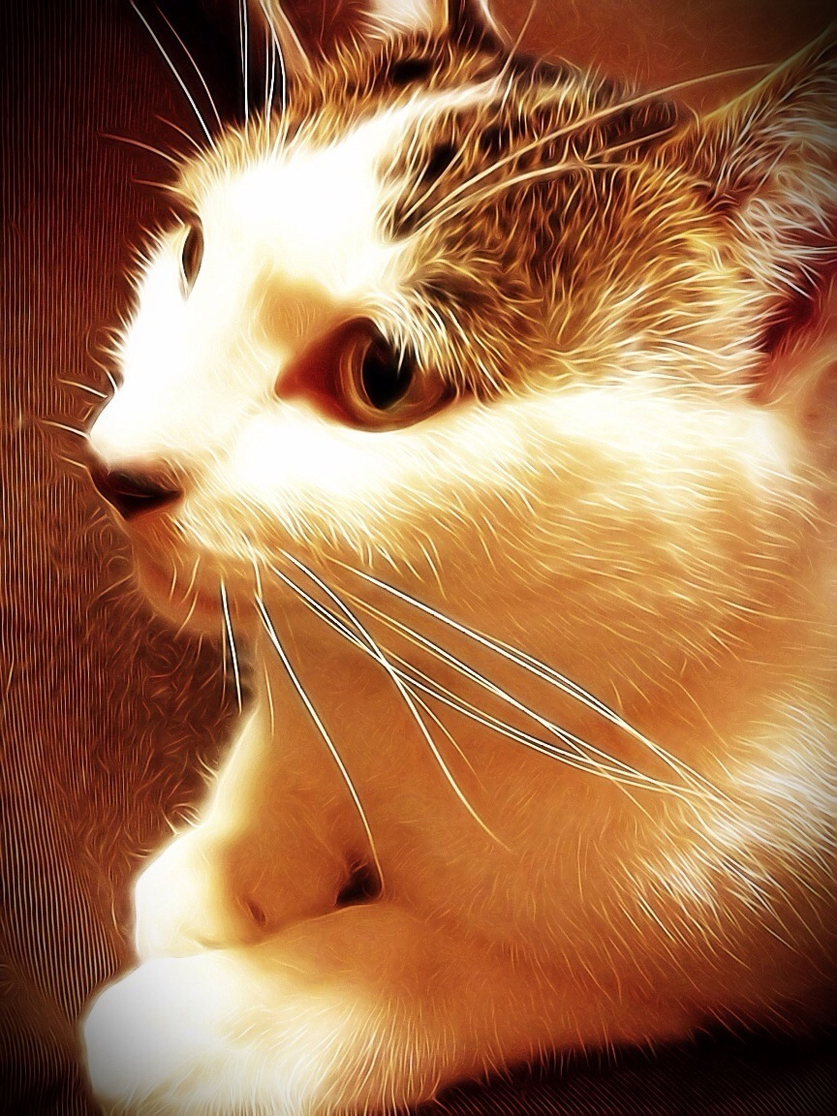 animal themes, pets, domestic animals, one animal, domestic cat, mammal, cat, feline, indoors, whisker, relaxation, close-up, animal head, lying down, resting, animal body part, looking at camera, home interior, vertebrate, zoology