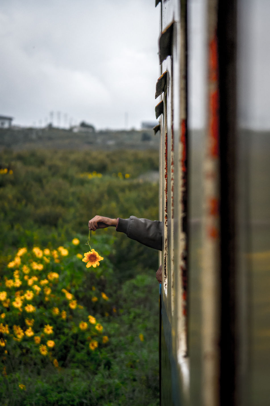 Beautiful stock photos of bahn, Cropped, Day, Flower, Holding