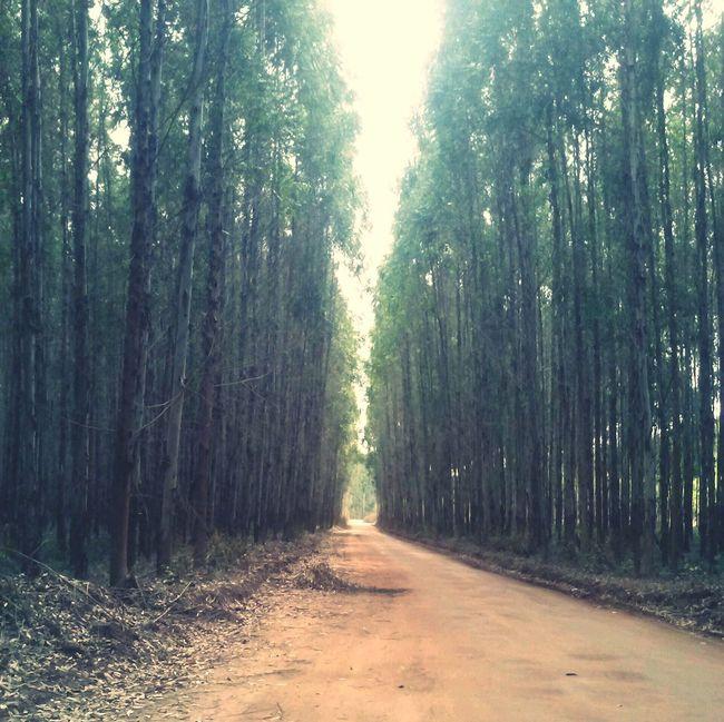 A caminho da roça... On The Road With BlaBlaCar Landscape