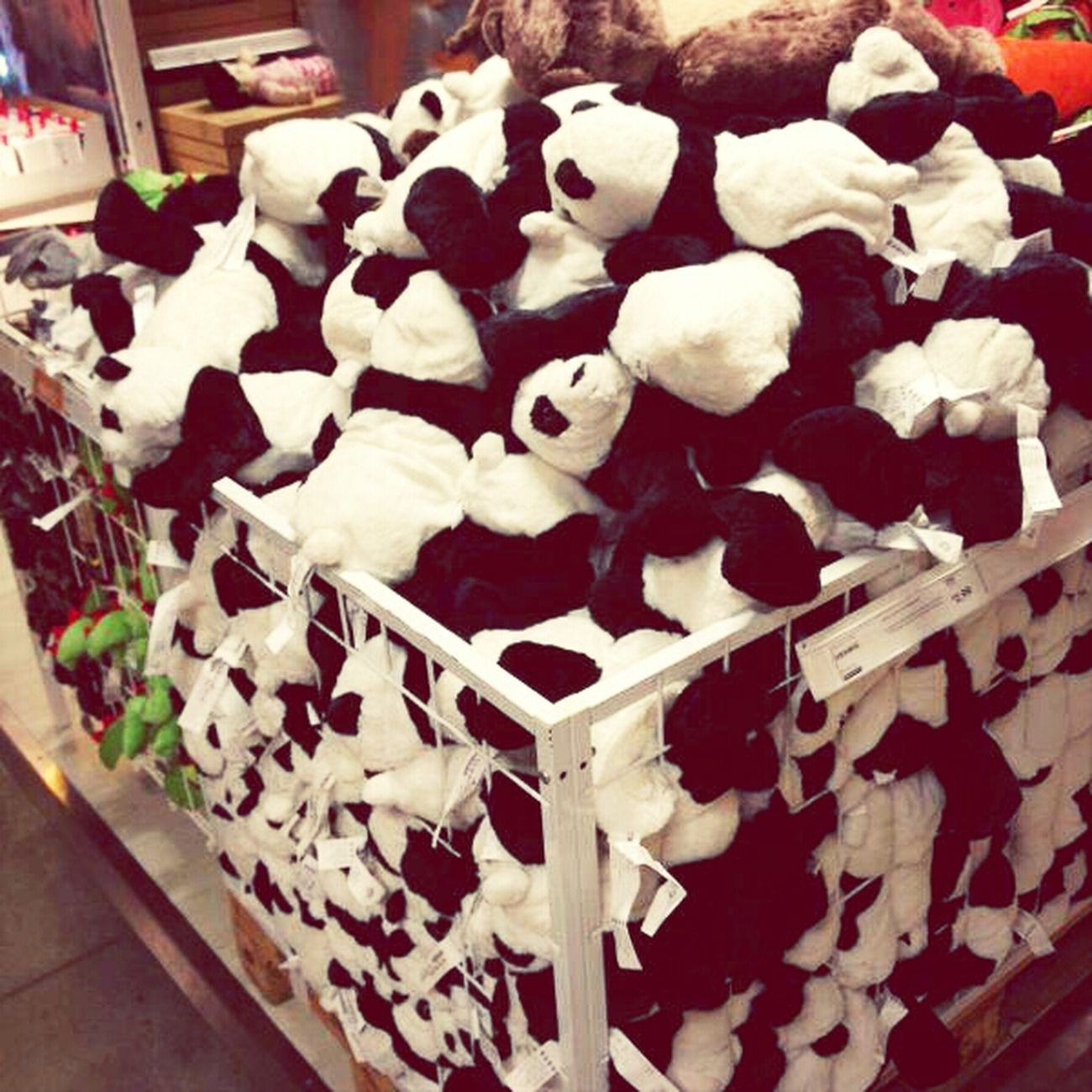 Panda everywhere
