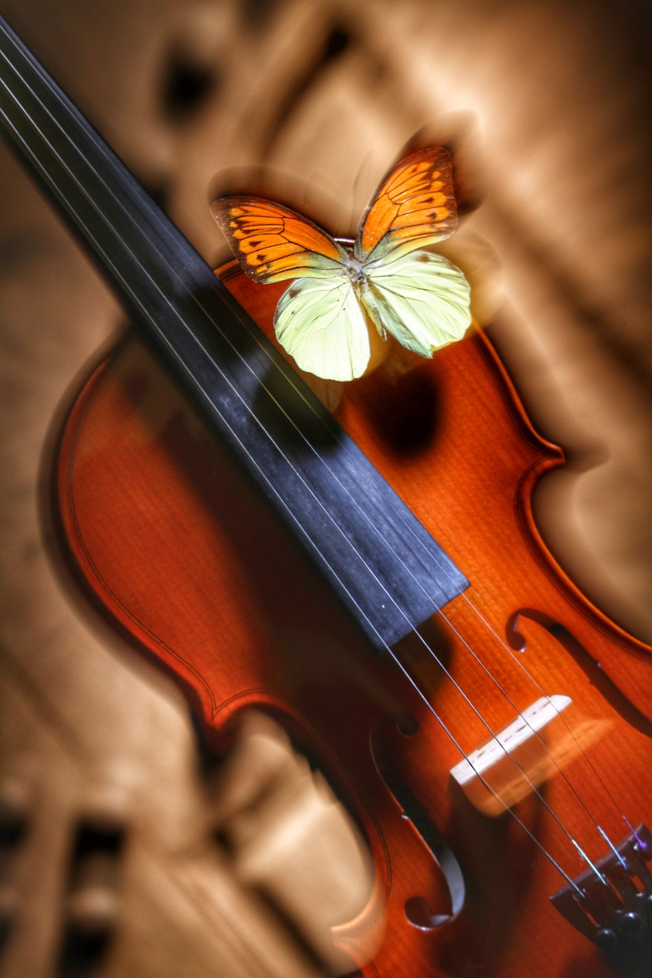 Apluskphotoworks Music Musical Instrument Arts Culture And Entertainment Musical Instrument String Classical Music No People Close-up Indoors  Animal Themes Day Dslrphotography Eos5dmarkiv Highkeyphotography Portrait Studiophotography