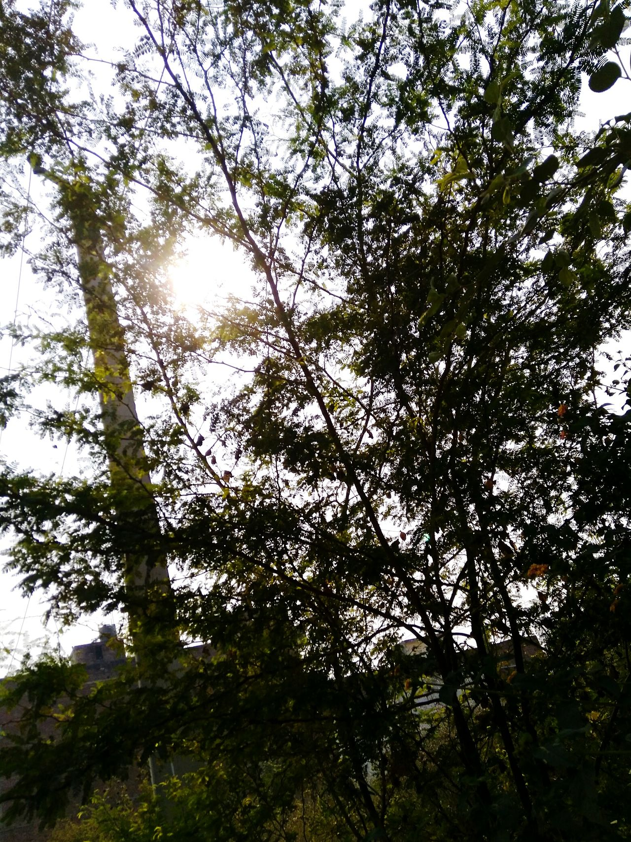 'Go green' are not just words... They make a complete sentence.. Awesome_shots Warm Yellow Freshness Love ♥ Perfect Day Colors No People Tree Sky Pravshoot Photosynthesis Treefood