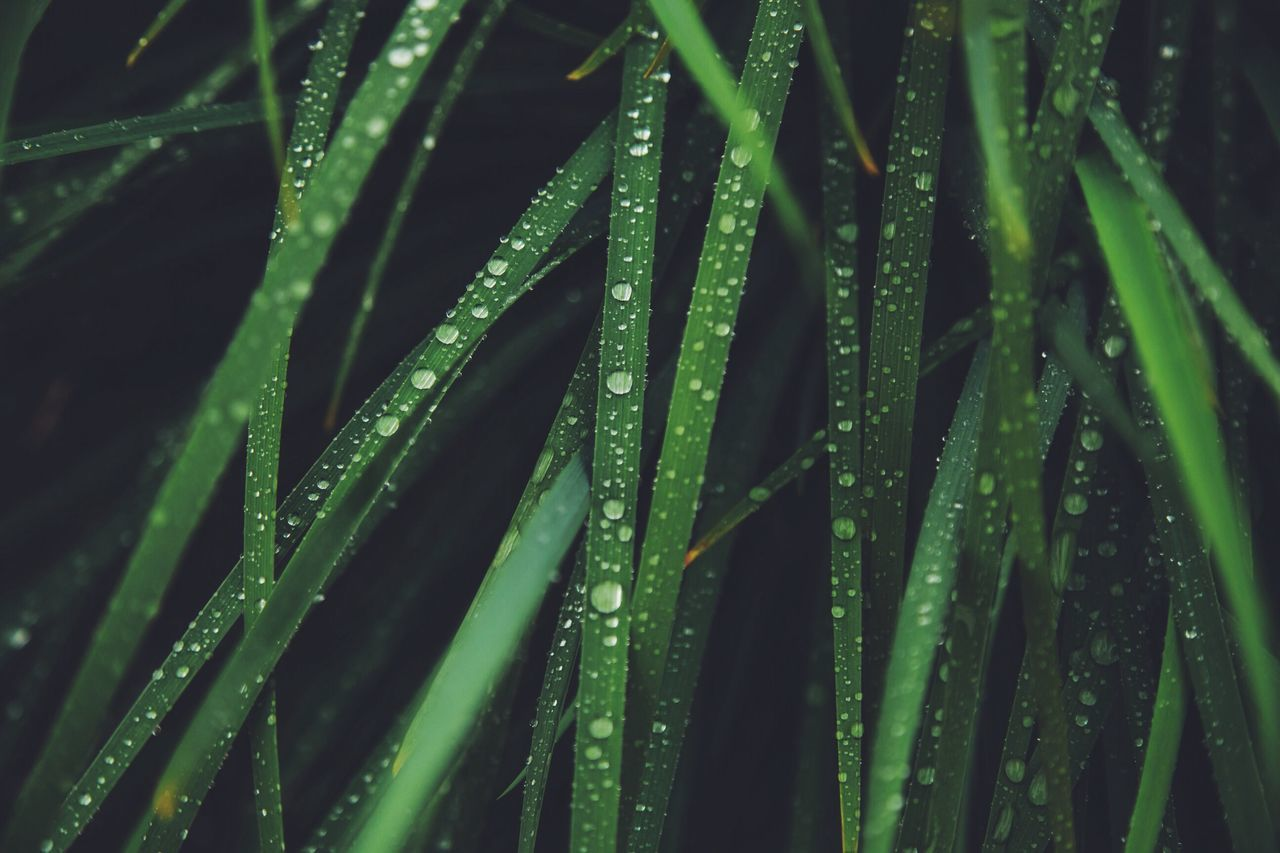 Flowers Nature Rain Water