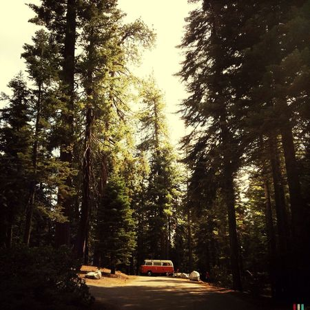 back in the woods! And Bully also 😃 California Seqouia Trees Nature EyeEm Nature Lover Trees The Adventure Handbook Camping Campervan Bulli Forest Landscapes With WhiteWall Feel The Journey Miles Away The Secret Spaces
