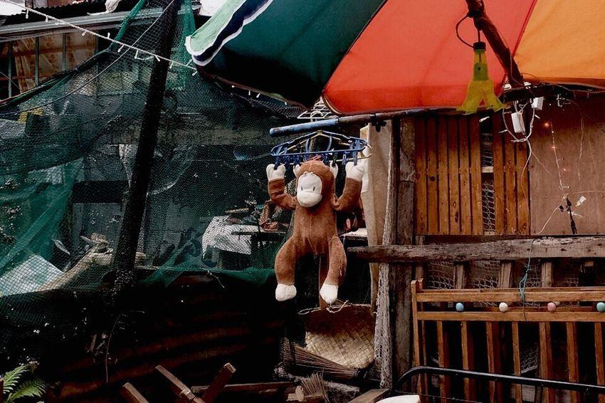 Showcase March Monkey Monkeys Monkey Business Monkey Year Yearofthemonkey Yearofthemonkey2016 Toy Toys Toymonkey Luck Lucky Hang Fortune Animals Prosper Prosperity Goodluck Streetphotography GoldenMonkey Nohumanelement Cover Stockphoto Funny Streetphoto