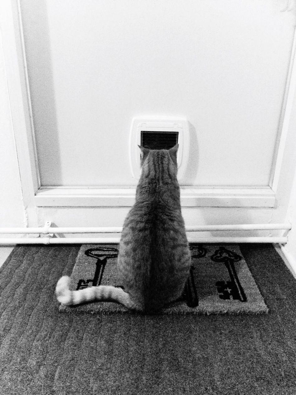 Cat Lovers Cats Cat Cat♡ Catoftheday Cats 🐱 Catsofinstagram Catdoor