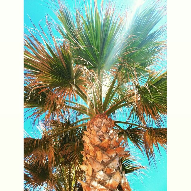 Colors are the smiles of nature. Colors Palm Trees Enjoying Life Beachwalk Beachphotography Beautiful World Home Sweet Home La Manga...Cartagena..