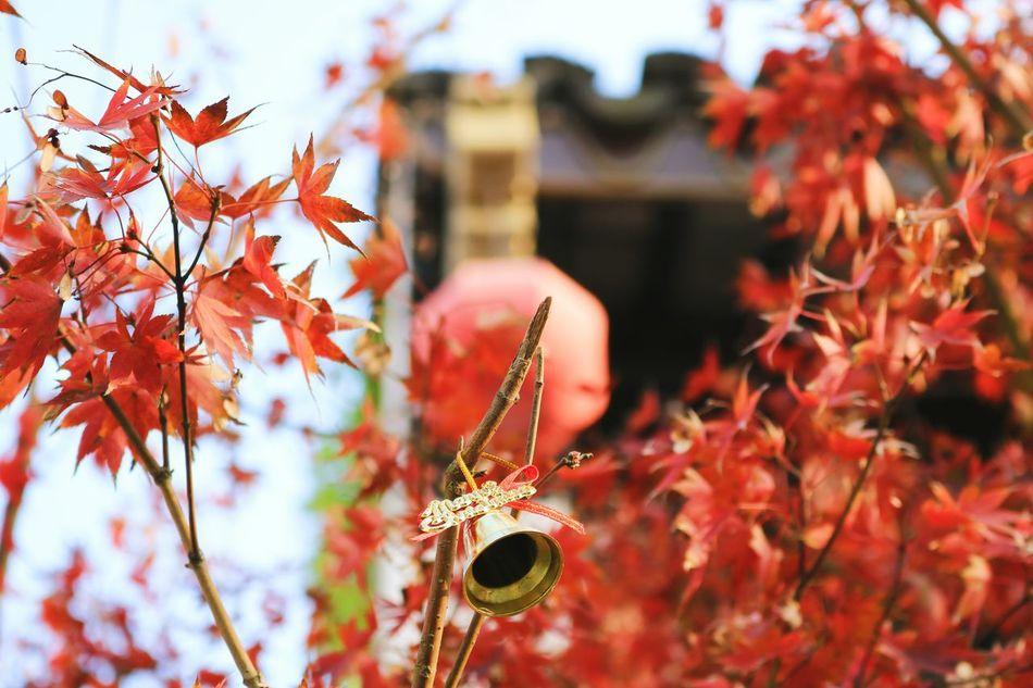 红红火火My Year My View Red Red Leaves Lookingup Looking Into The Future Building Exterior Architecture Lifestyles Bell The Bell  Lantern Red Lantern Citylife Quality Time Relaxing
